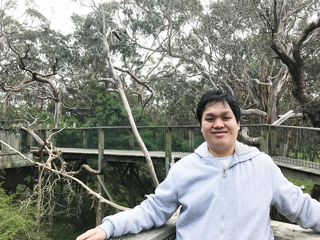 菲利普岛景点无尾熊 Koala Convention Center