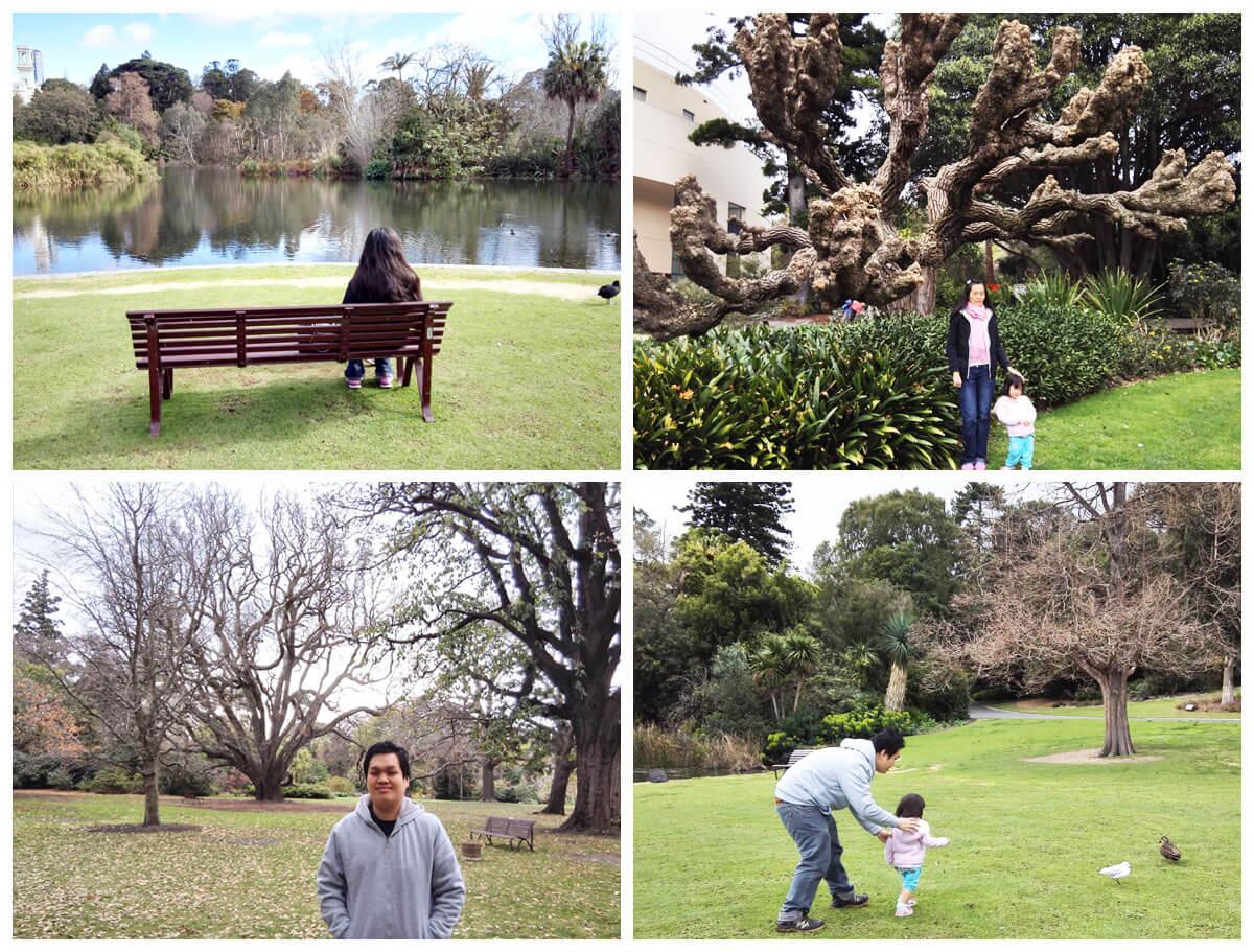 墨尔本景点皇家植物园