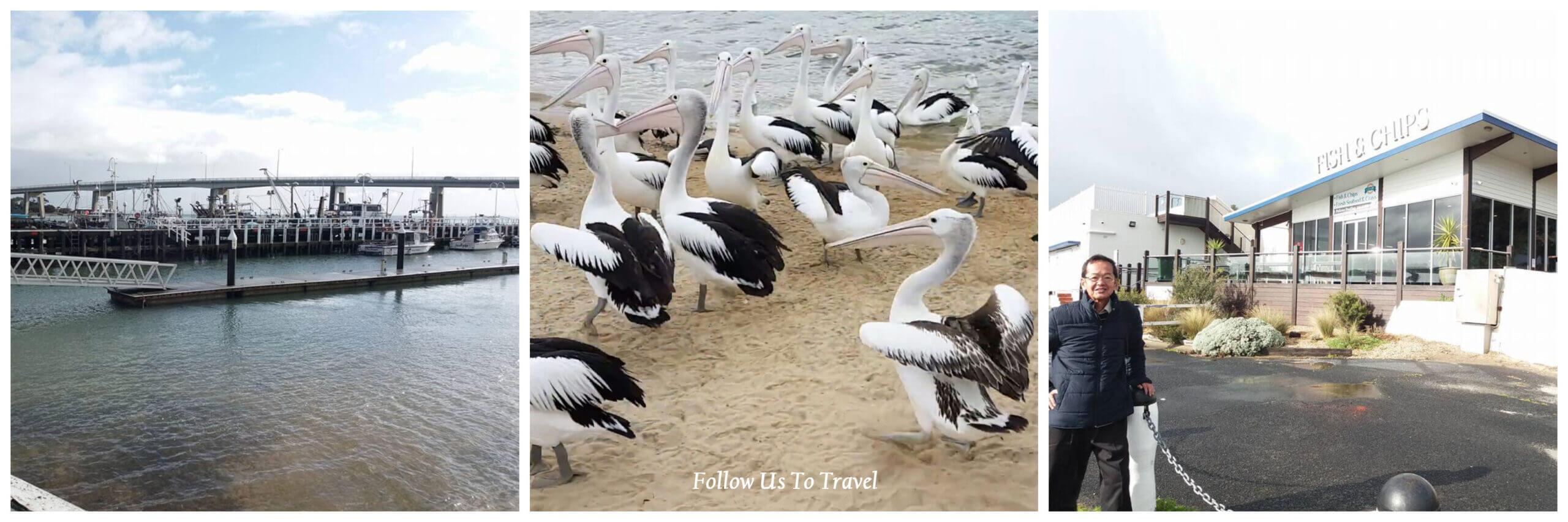 san remo pelican