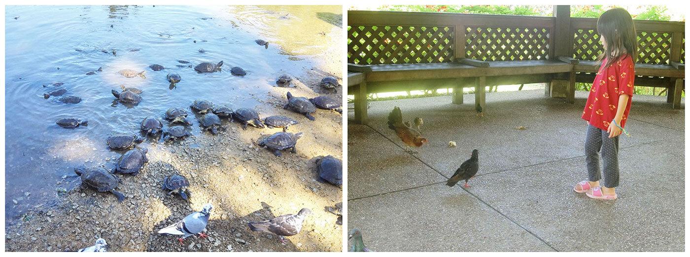 singapore botanic gardens animals