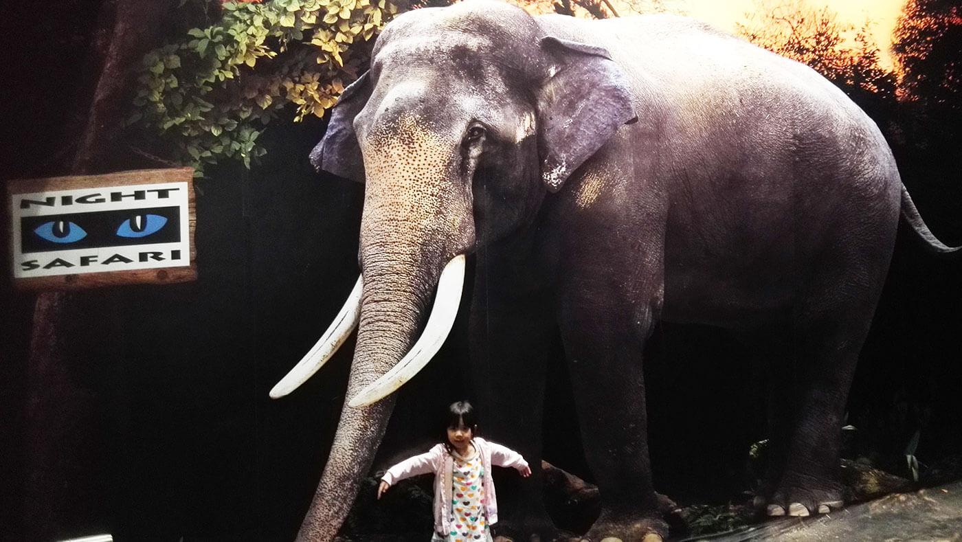 新加坡夜间野生动物园大象