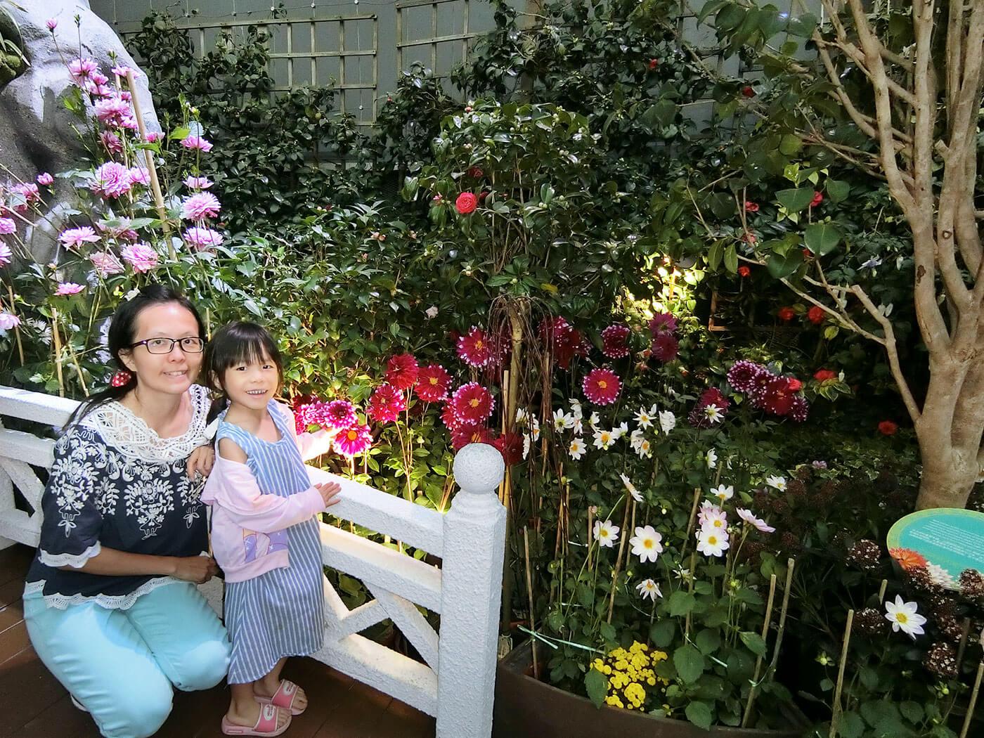 花穹花卉植物