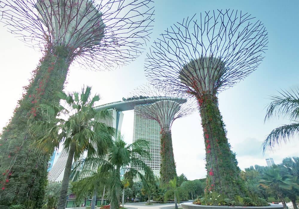 新加坡必玩景点滨海湾花园