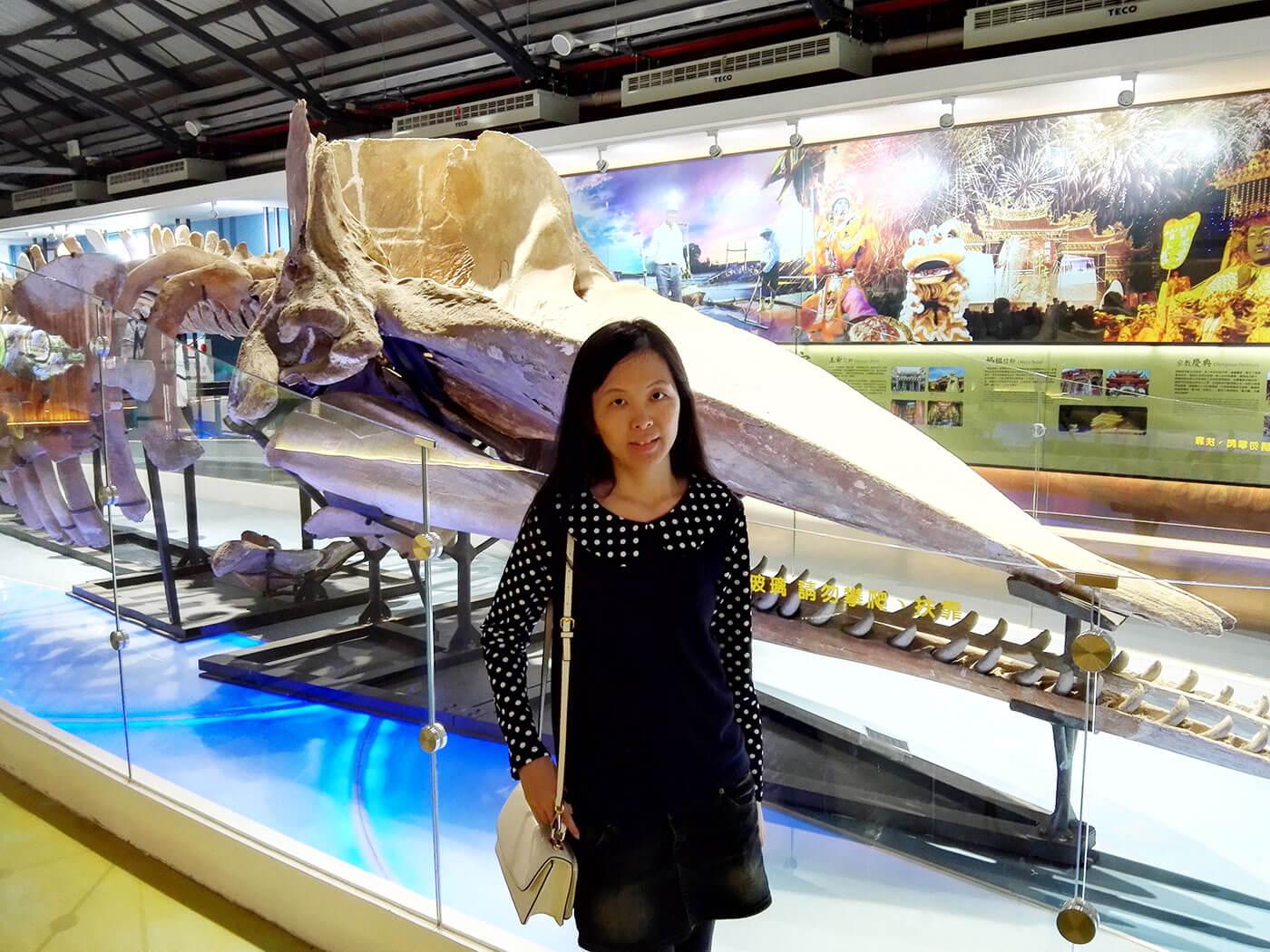 北门游客中心抹香鲸标本