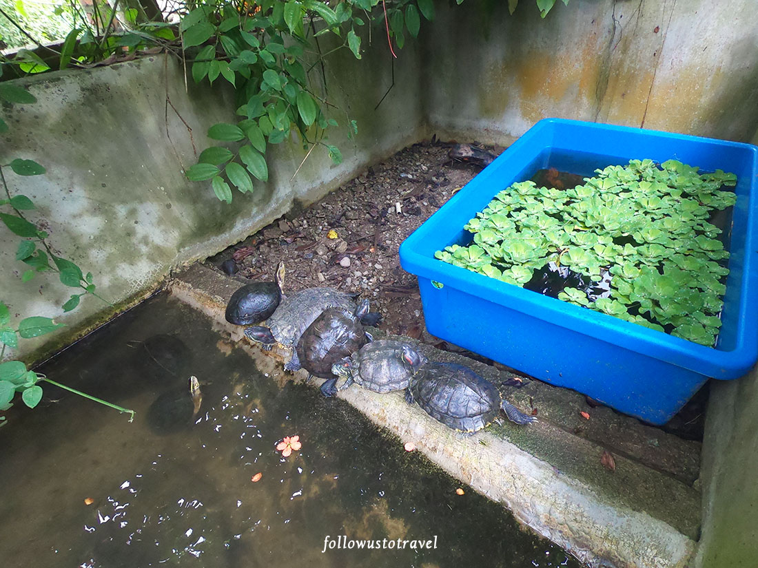 桃园谷饭店乌龟池