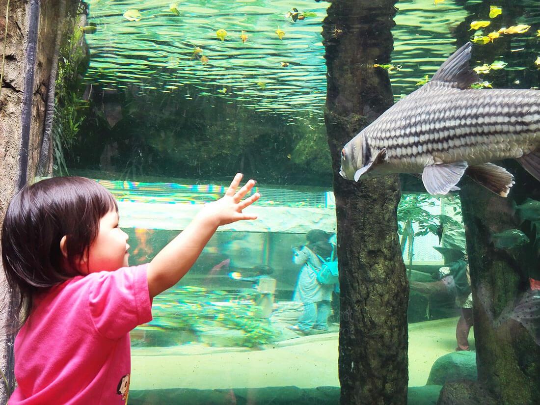 兰卡威景点兰卡威海底世界水族館