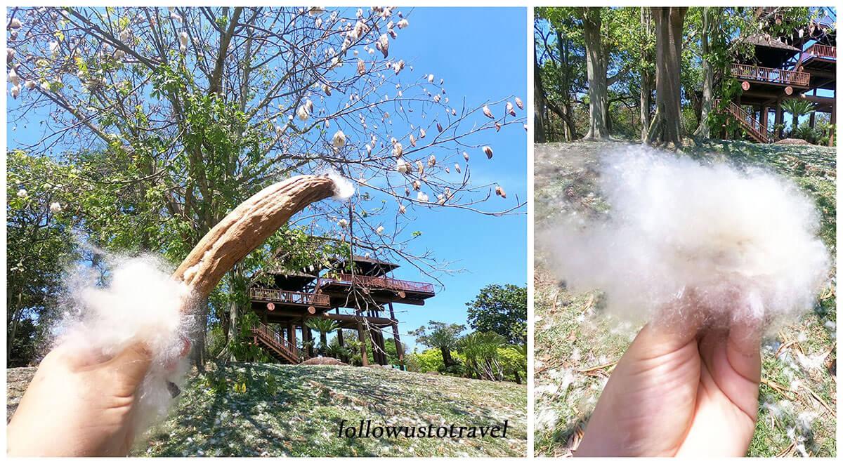 布城湿地公园木棉树