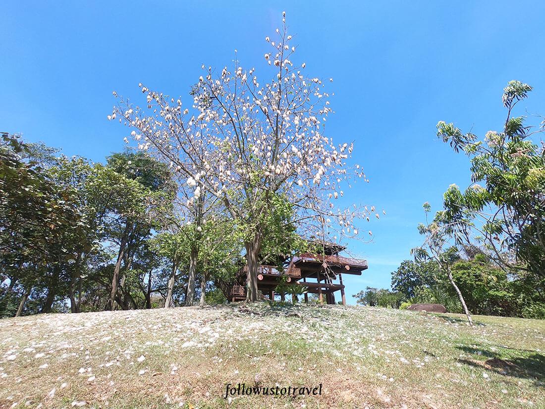 布城景点湿地公园木棉树