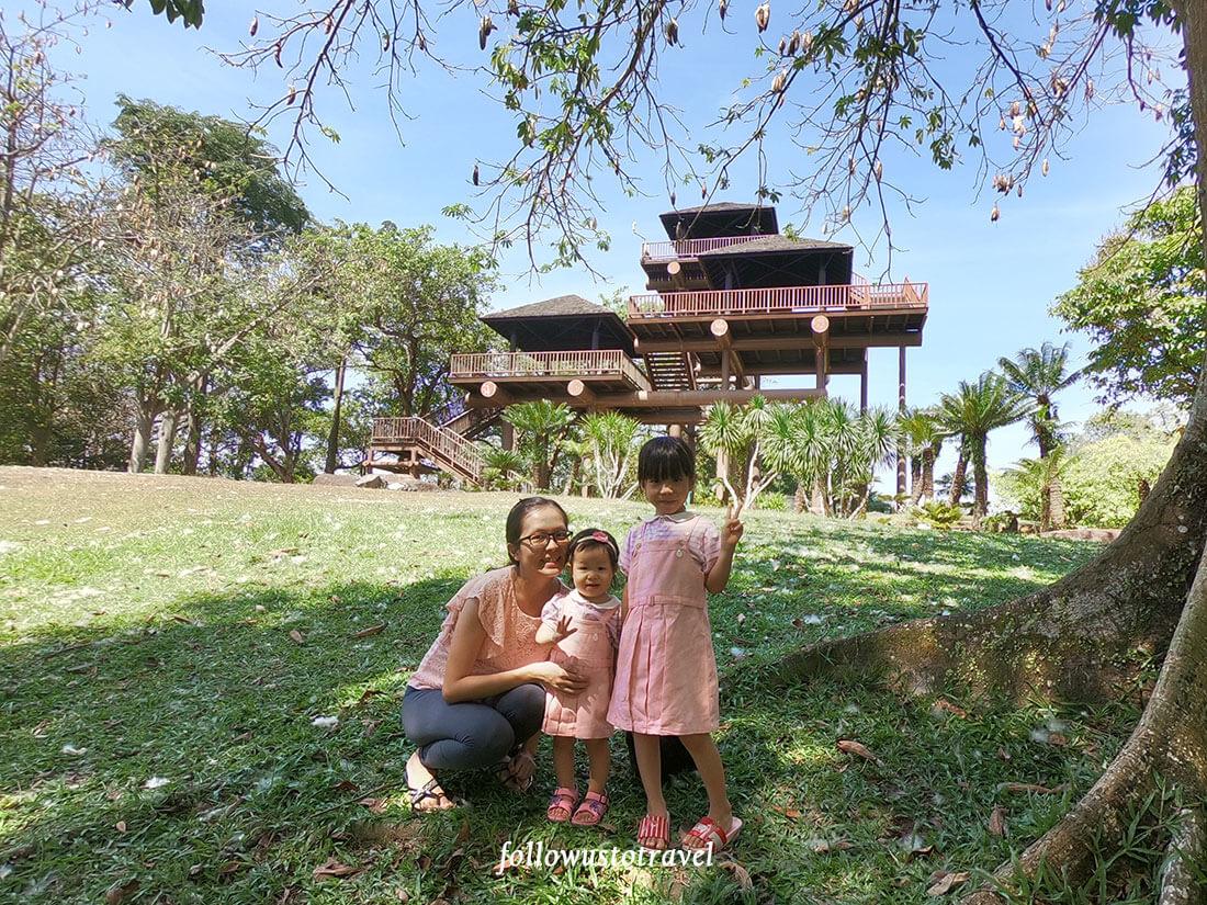 布城湿地公园木棉树棉花树