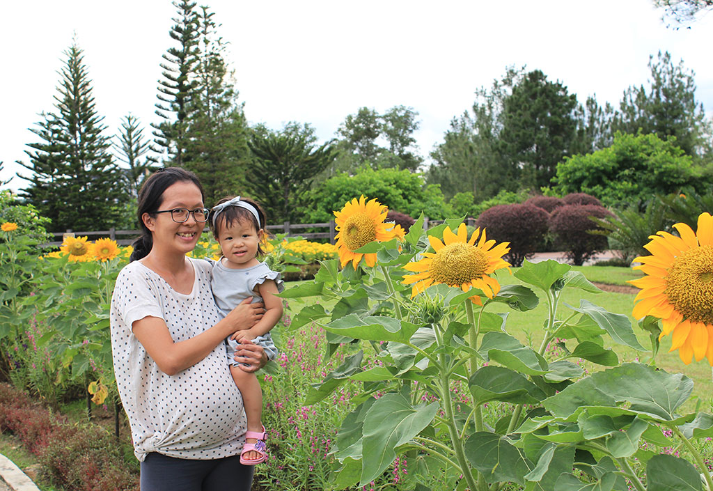 taman saujana hijau sunflower